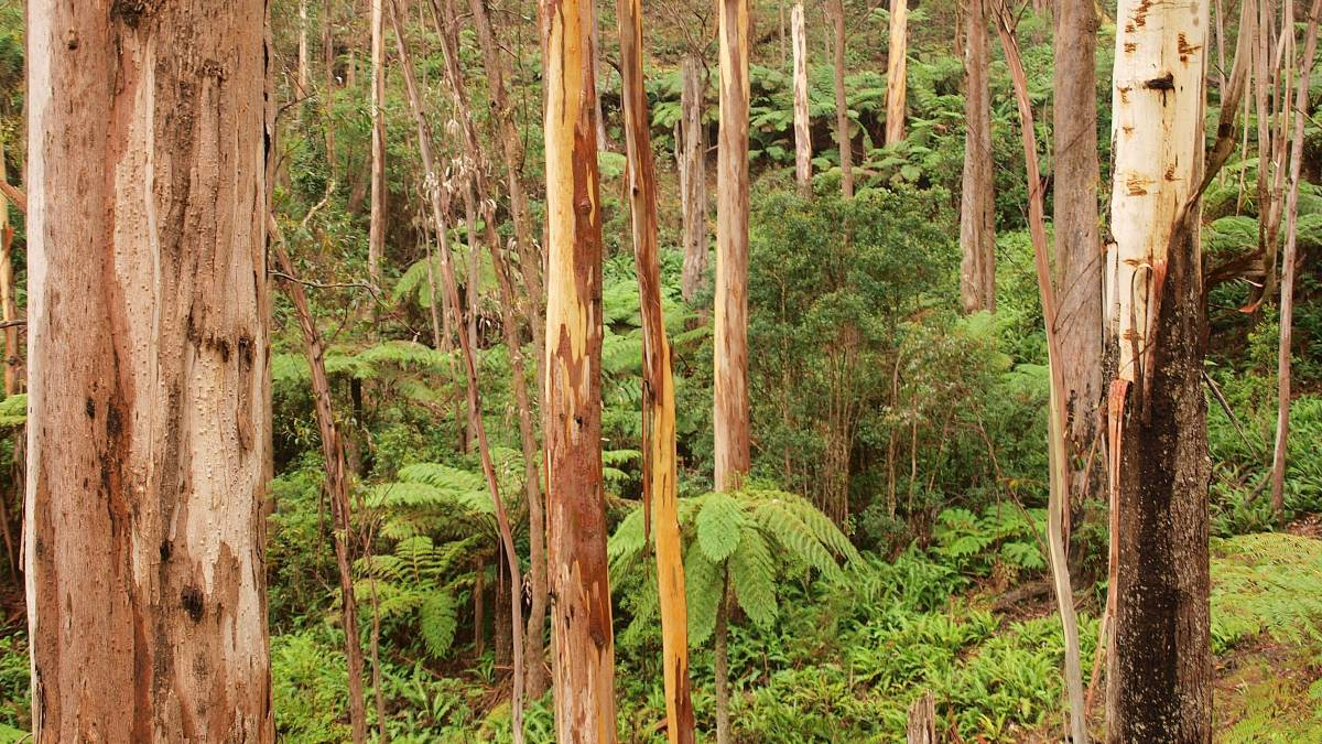 Costs 'saw' point for Greens, Timber NSW